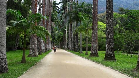 botanical garden rio de janeiro stock footage video