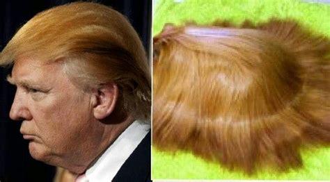 donald trump vs corn donald trump vs a combed out guinea pig stolen looks