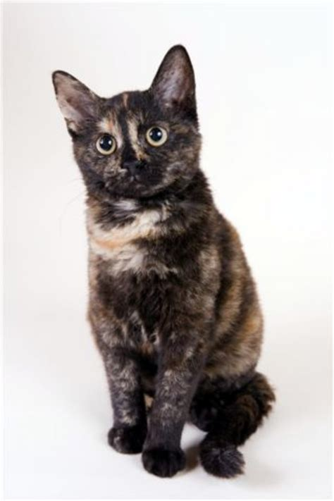 cat breeds images reverse search