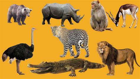 imagenes de animales salvajes para niños los animales salvajes de 193 frica para ni 241 os en espa 241 ol