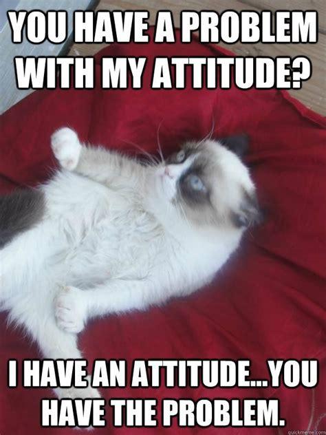 Sarcastic Cat Meme - 389 best images about grumpy cat on pinterest grumpy cat