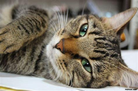 imagenes de animales uñas los 225 caros en los gatos mascotas