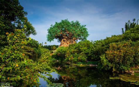 imagenes disney animal kingdom tree of life at disney s animal kingdom full hd wallpaper
