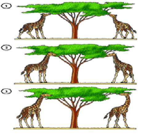 imagenes de las jirafas de lamarck escuela 4 036 raul scalabrini ortiz ciencias naturales 2