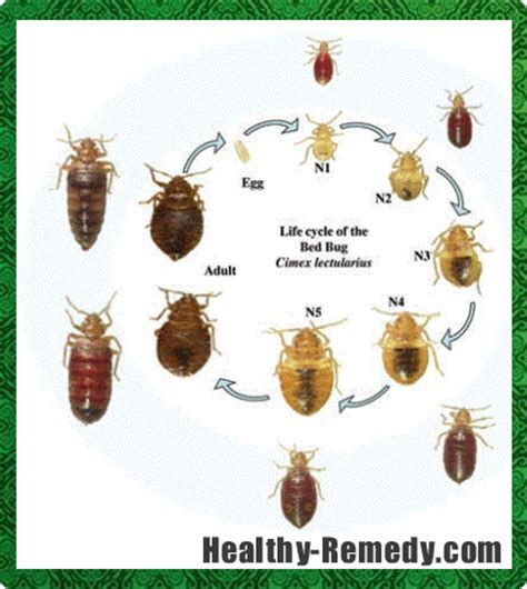 bed bug prevention products canada pest