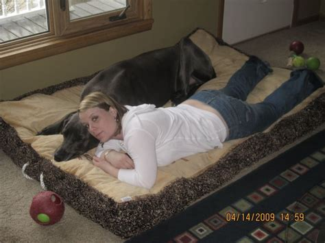 great dane dog bed great dane dog bed dog breeds picture