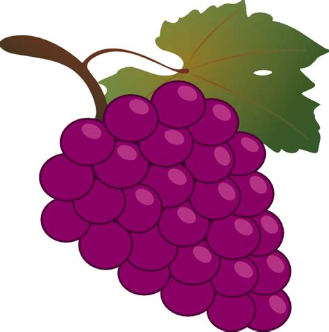uva clipart grape clip at clker vector clip