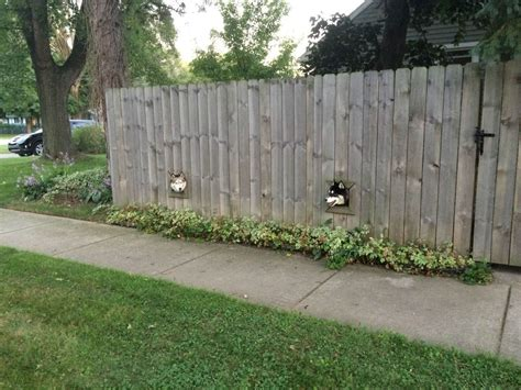 Backyard Fence For Dogs by A Creative Wooden Fence That Allows Dogs To Peek Outside