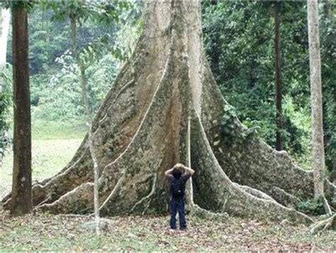 Pembela Tanah Air Peta Di Cileunca Bandung daftar tempat wisata alam di kota bogor dan sekitarnya