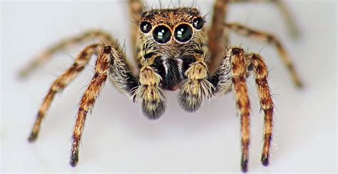 jumping house spiders ask wet forget the most common house spiders and how to know if they re in your