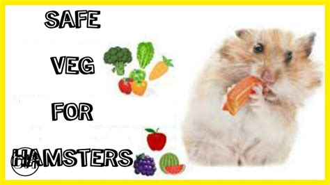 vegetables a can eat safe veggies for hamsters
