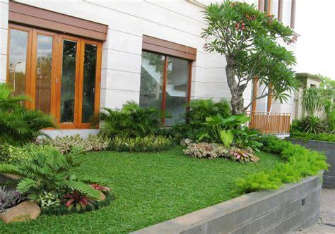 taman hias tukang taman pohon hias rumput gajah mini