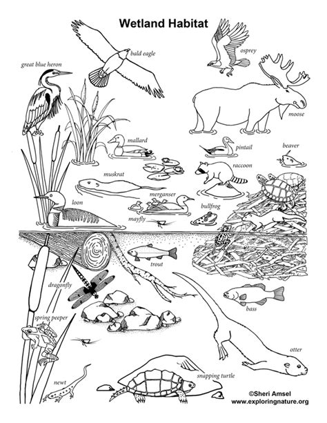 coloring pages of animals in their habitats wetland habitat coloring nature