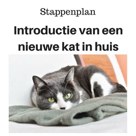 nieuwe kat in huis stappenplan introductie van een nieuwe kat in huis puur