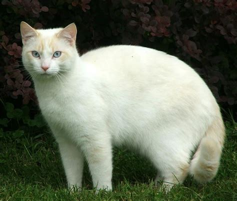 White Cat ingl 233 s what 180 s the problem 52 a story quot the white cat