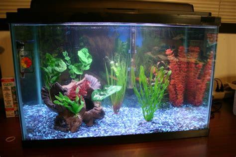 Aquarium Top Filter Filter Akuarium Lengkap how to setup a new aquarium expert how