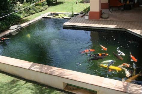 selecting   filter   koi pond wild aqua zoo