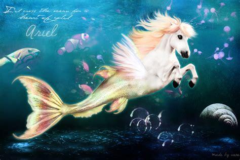 the mermaid s mermaids images merhorse is coll hd wallpaper and