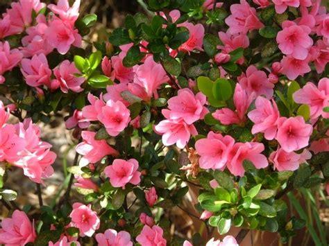 top  arbustos  flores parques alegres iap