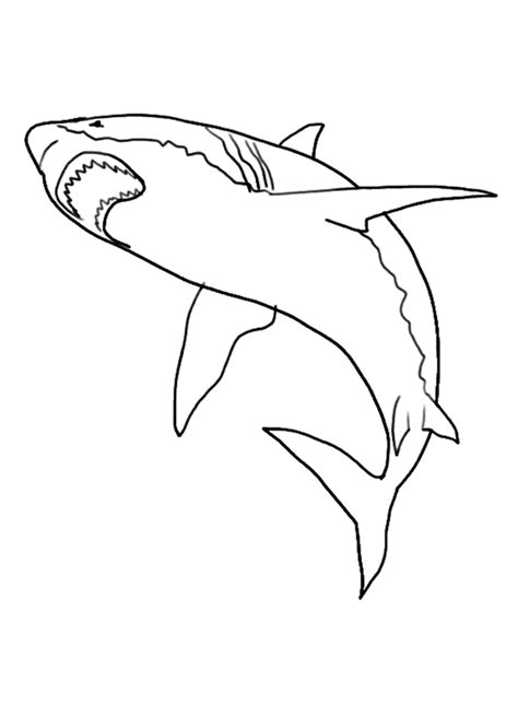 mako templates mako mermaid coloring sheets coloring pages