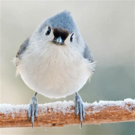 welcome winter birds to your yard audubon new york