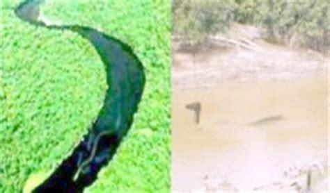 film ular naga ular naga ternyata ada di sungai mahakam antara news
