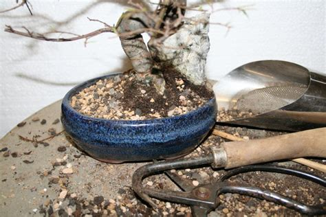 wann muss gebärmutter entfernt werden umtopfen bonsaipflege ch