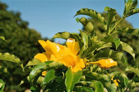 blumen und pflanzen fotos gelbe blumen und pflanzen photos of yellow flowers