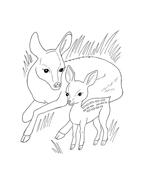 printable animal pictures of wild animals coloring pages of wild animals kids coloring europe