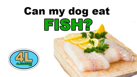 can dogs eat fish can my eat fish 4leggers
