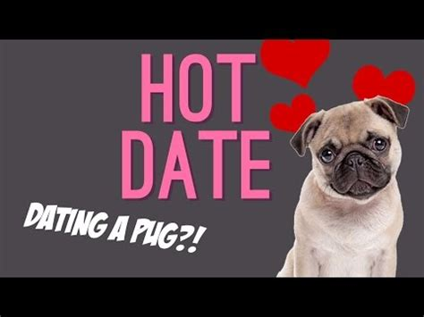 date with a pug dating a pug date by george batchelor