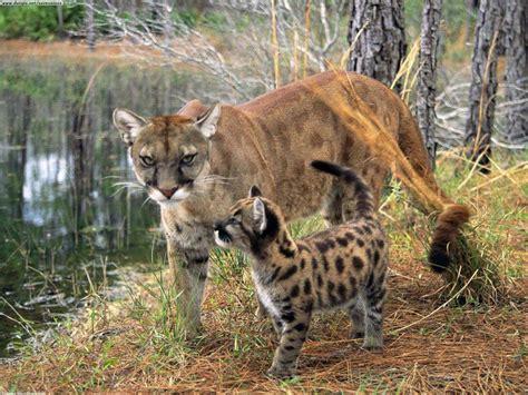 Animales exoticos que se encuentran en peligro de extincion
