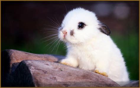 imagenes mas originales del mundo fotos de conejos muy bonitos archivos imagenes de conejitos