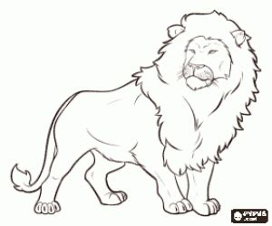 male lion coloring pages felines coloring pages printable games