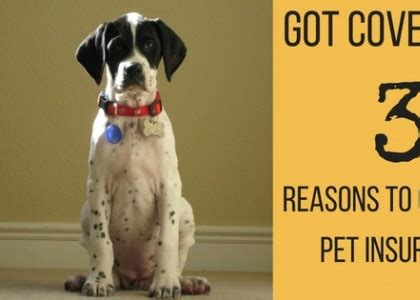 7 Reasons To A Pet by Seven Veterinary Hospital A Practice Based On Caring