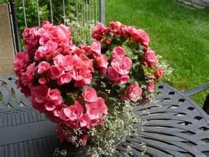Easy Garden Flowers Kanelstrand Simple Gardening Part 2