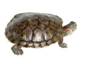 PET SMART TORTOISE: Care Sheet for Turtles & Tortoises