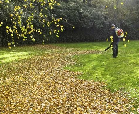 fall leaf cleanup landscape contractors for glen ellyn