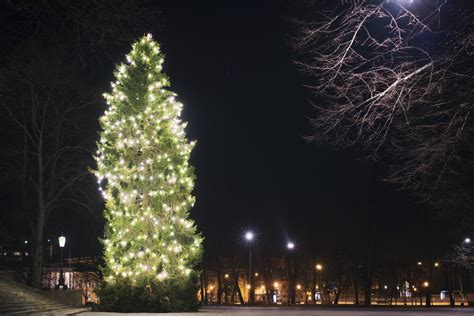 christmas trees around the world slideshow 25 stunning trees around the world