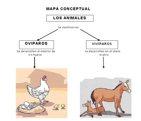 imagenes de animales viviparos y oviparos webquest creator 2