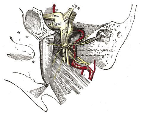 arteria mascellare interna trigeminal cave