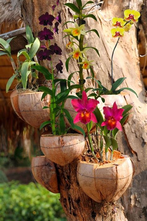 Orchid Planter Ideas by 25 Best Ideas About Tree Planters On
