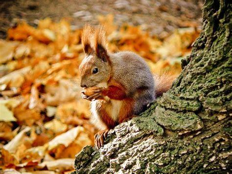 animal seasons squirrels autumn 1848358784 204 best a u t u m n s l i t t l e b i t s images on
