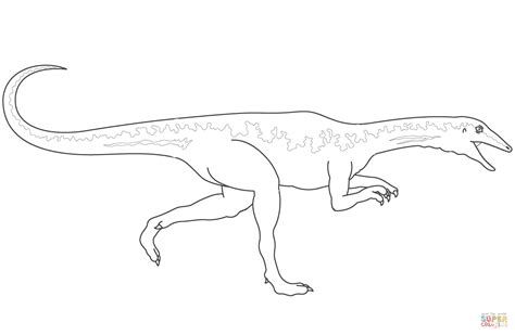 Coloring Page Velociraptor by Dinosaur Velociraptor Coloring Page Free Printable