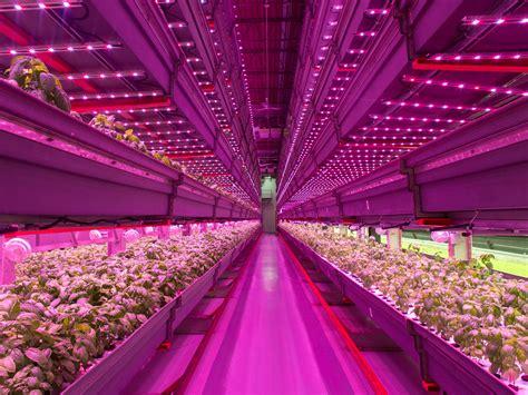 future  agriculture   indoor vertical farm