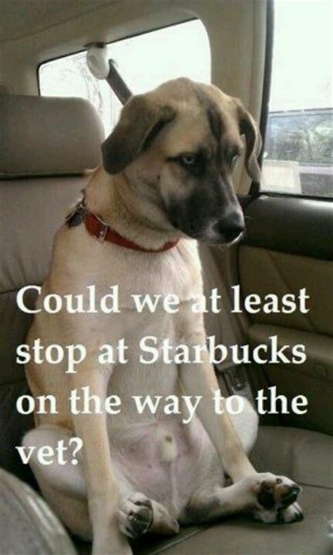 starbucks puppy starbucks silly