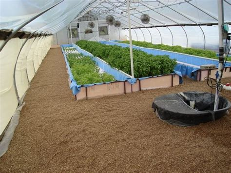 best 25 aquaponics greenhouse ideas only on