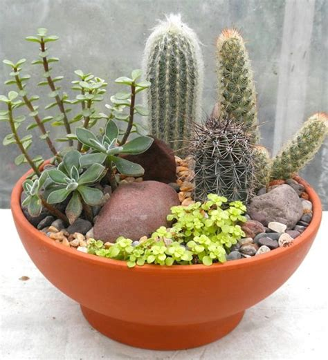 Dish Garden by How To Make A Succulent Dish Garden Step By Step