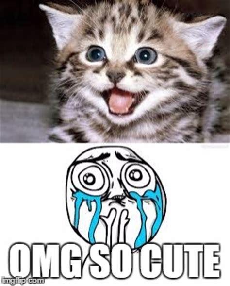 Cute Cat Meme Generator - cute cats imgflip