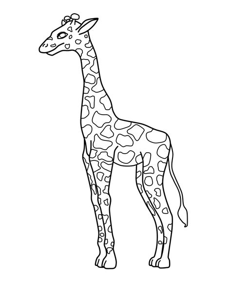 what color is a giraffe free printable giraffe coloring pages for